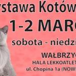 wystawa-kotow